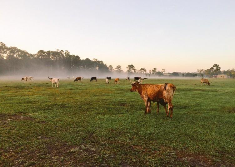 Tomorrow Farm