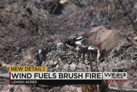 brushfirelehighthumb