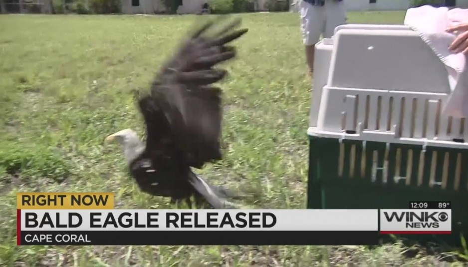 eagle released